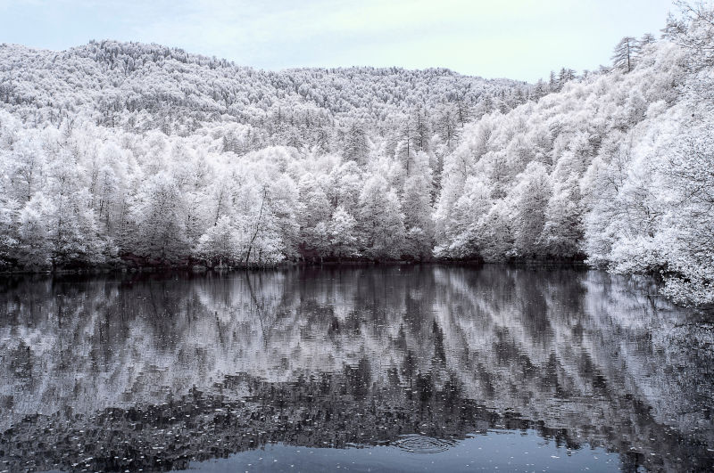 infrared photo of trees and lake